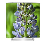Lupinus Polyphyllus Shower Curtain