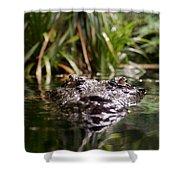 Lurking Crocodile Shower Curtain