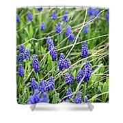 Lush Grape Hyacinth Shower Curtain