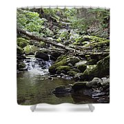 Lush Stream And Canopy Foliage Shower Curtain