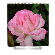 Lustrous Pink Rose Shower Curtain