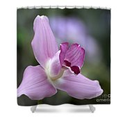 Lycaste Abou First Spring 0884 Shower Curtain