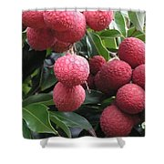 Lychee Shower Curtain