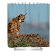Lynx In Profile On Rock Looking Down Shower Curtain