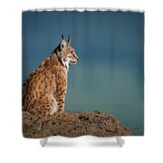 Lynx In Profile On Rock Looking Up Shower Curtain