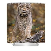 Lynx Kit Shower Curtain