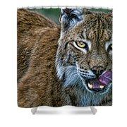 Lynx Licks Lips Shower Curtain