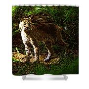 Lynx Rufus Shower Curtain