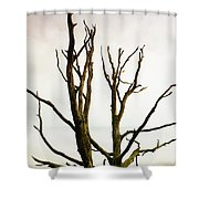 Macabre Leafless Tree Shower Curtain