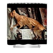 Macabre Mummified Cat - Halloween Shower Curtain