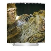 Macaques Jerez De La Frontera Spain Shower Curtain