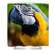 Duke Macaw Shower Curtain