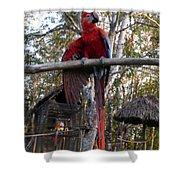 Macaw Guatemala Shower Curtain