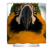 Macaw IIi Shower Curtain