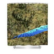 Macaw In Flight Shower Curtain