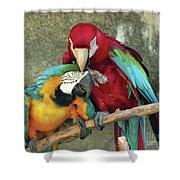 Macaw Love Shower Curtain