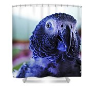 Macaw Parrot Blue Looking At You Shower Curtain