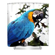 Macaw Parrot Shower Curtain