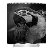 Macaw Portrait In Black And White Shower Curtain