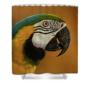 Macaw Portrait Shower Curtain