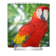 Macaw Shower Curtain