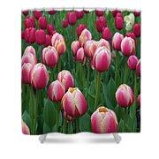 Mackinac Island Tulips 10681 Shower Curtain