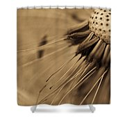 Macro - Dandelion Shower Curtain