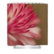 Macro - Pink Flower Shower Curtain