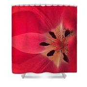Macro Beauty Tulip Shower Curtain