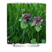 Macro Blooming Clover Shower Curtain