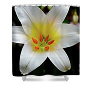 Macro Close Up Of White Lily Flower In Full Blossom Shower Curtain