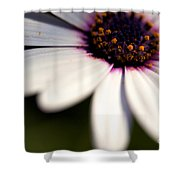 Macro Daisy Shower Curtain