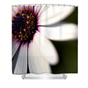 Macro Daisy One Shower Curtain