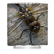 Macro Dragonfly Shower Curtain