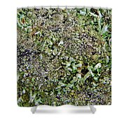 Macro Forest  Shower Curtain