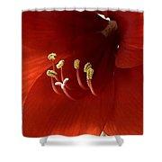 Macro Of Red Amaryllis Flower Shower Curtain