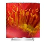 Macro Poppy 4 Shower Curtain