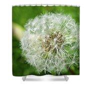macro shot of a beautiful Dandelion. Shower Curtain