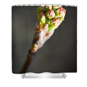 Macro Young Crabapple Tree Blossom Shower Curtain