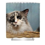 Mad Cat Shower Curtain