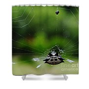 Spiny Orb Weaver Shower Curtain