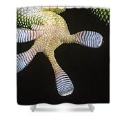 Madagascar Day Gecko Phelsuma Shower Curtain
