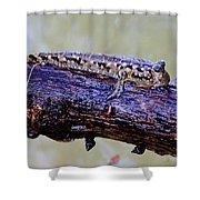 Madagascar Mudskipper Shower Curtain