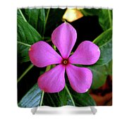 Madagascar Periwinkle Shower Curtain