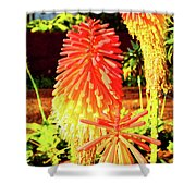 Madeira Funchal  Tritoma, Red Hot Poker, Torch Lily, Poker Plant Shower Curtain