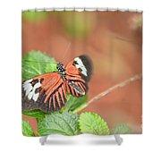 Madiera Butterflies Shower Curtain