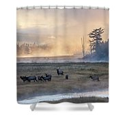 Madison Morning Shower Curtain