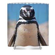 Magellanic Penguin In Argentina Shower Curtain