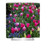 Magenta And White Tulips Shower Curtain