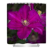 Magenta Clematis Shower Curtain